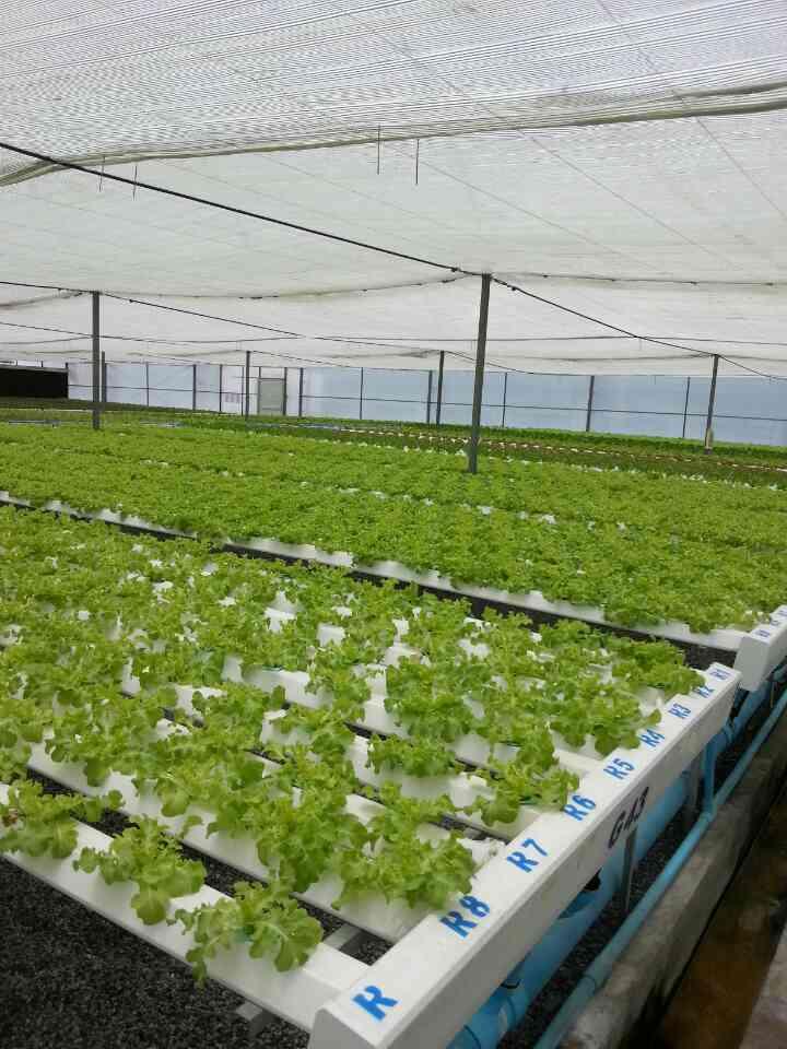 how to cancel fresh city farms